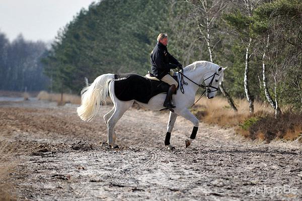 Jos Lansink Horses bvba